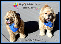 "The Birney Boys ""Jagger & Jaxon"" ( Zoe/Banks)"