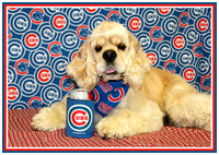 "Ruger ""rootin' for the Cubbies October 2017"""